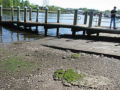 The Boat Ramps and Dock at Low Tide