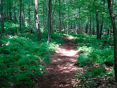 Trail at Fry Pond Preserve