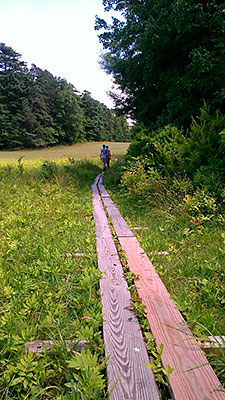Boardwalk Across a Wet Area on the Pond Trail