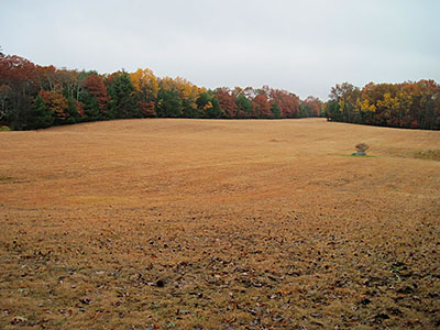 Fall Field on the Coney Brook Trail