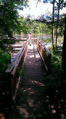 Viewing Platform at the North End of Tillinghast Pond