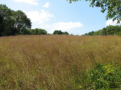 Meadow at Fisherville Brook Wildlife Refuge