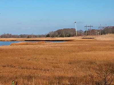 The salt marshes and the Palmer River
